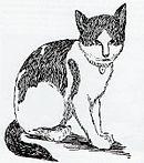 Nansen the cat