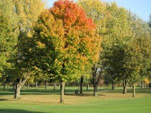 Barton tree