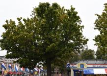 Hague tree