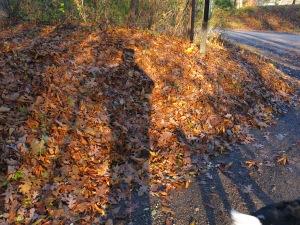 Nov leaves