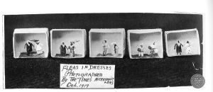 800px-Fleas_in_dresses_at_Ye_Olde_Curiosity_Shop