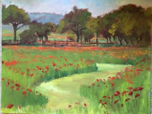 Shortliffe poppies