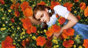 WizardofOz_poppies