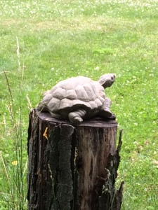 Tortise on post