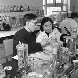 Tu_Youyou_and_Lou_Zhicen_in_1951.TIF
